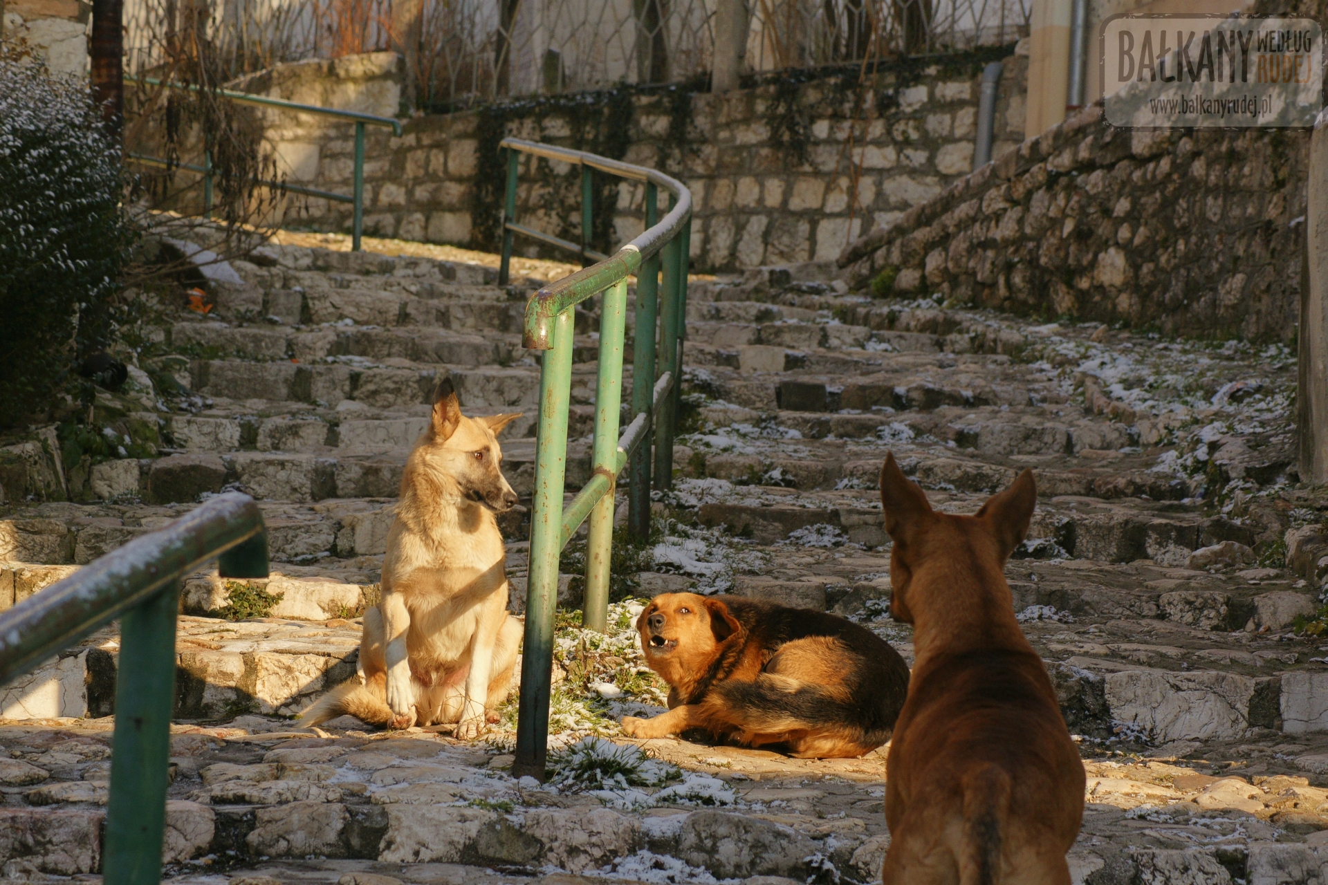 psy Sarajewo