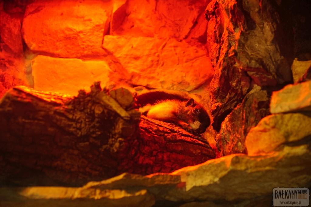 Opolskie Zoo