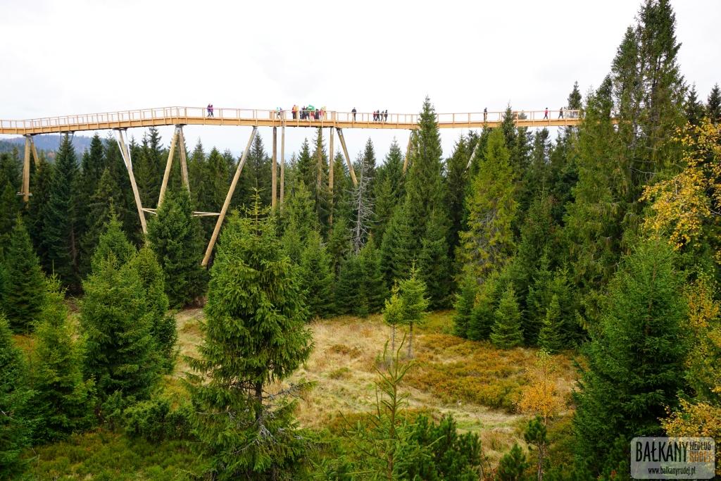 Ścieżka w koronach drzew Bachledka